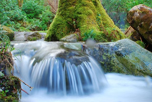 水槽における水流の重要性とは?水草の生長との関係性も!