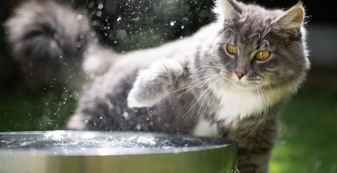 Reasons Why Cats Keep Knocking Over Water Ball and How to Stop It