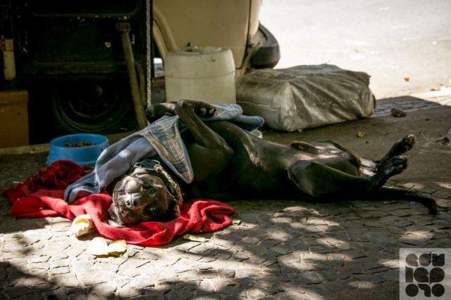 moradores de rua e seus cães 2