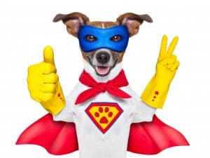 hero dog with cape