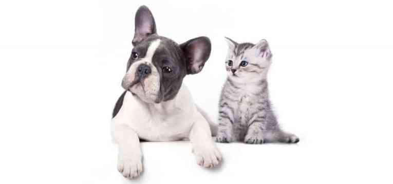 French-Bulldog-Dog-Insurance2