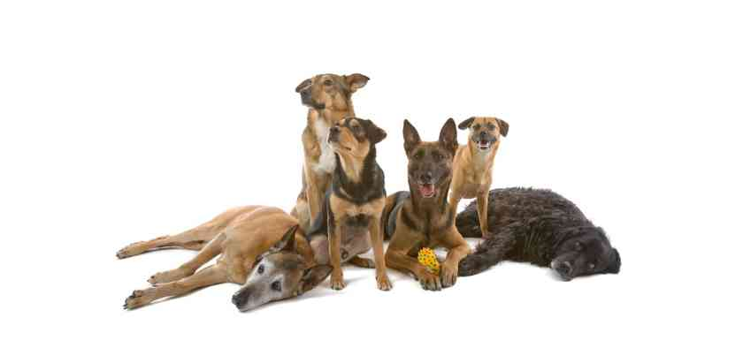 Mixed-Breed-Dog-Insurance2