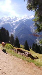 Chamonix, parc de Merlet, belle vue