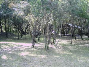Voyage camping au Kenya