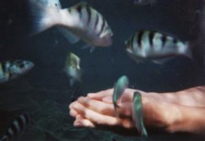 Voyage poissons tropicaux