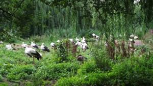 Alsace, Naturoparc