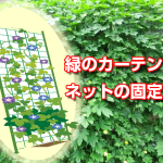 midori_net