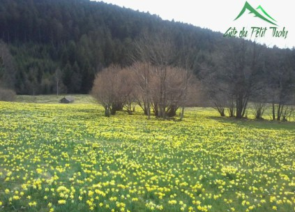 vacances pas cher dans les Vosges, gîte au calme