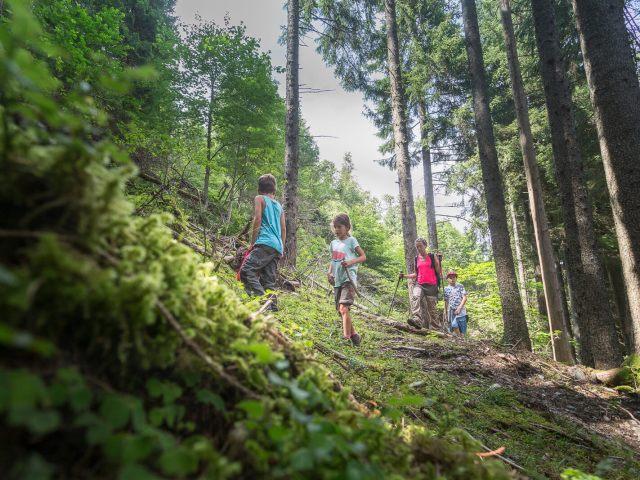 8 trucs pour ne pas perdre ses enfants en forêt