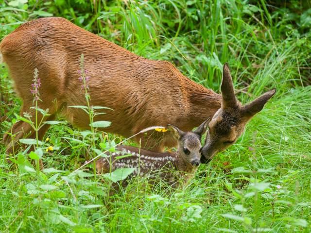 Comment voir des animaux sauvages en France