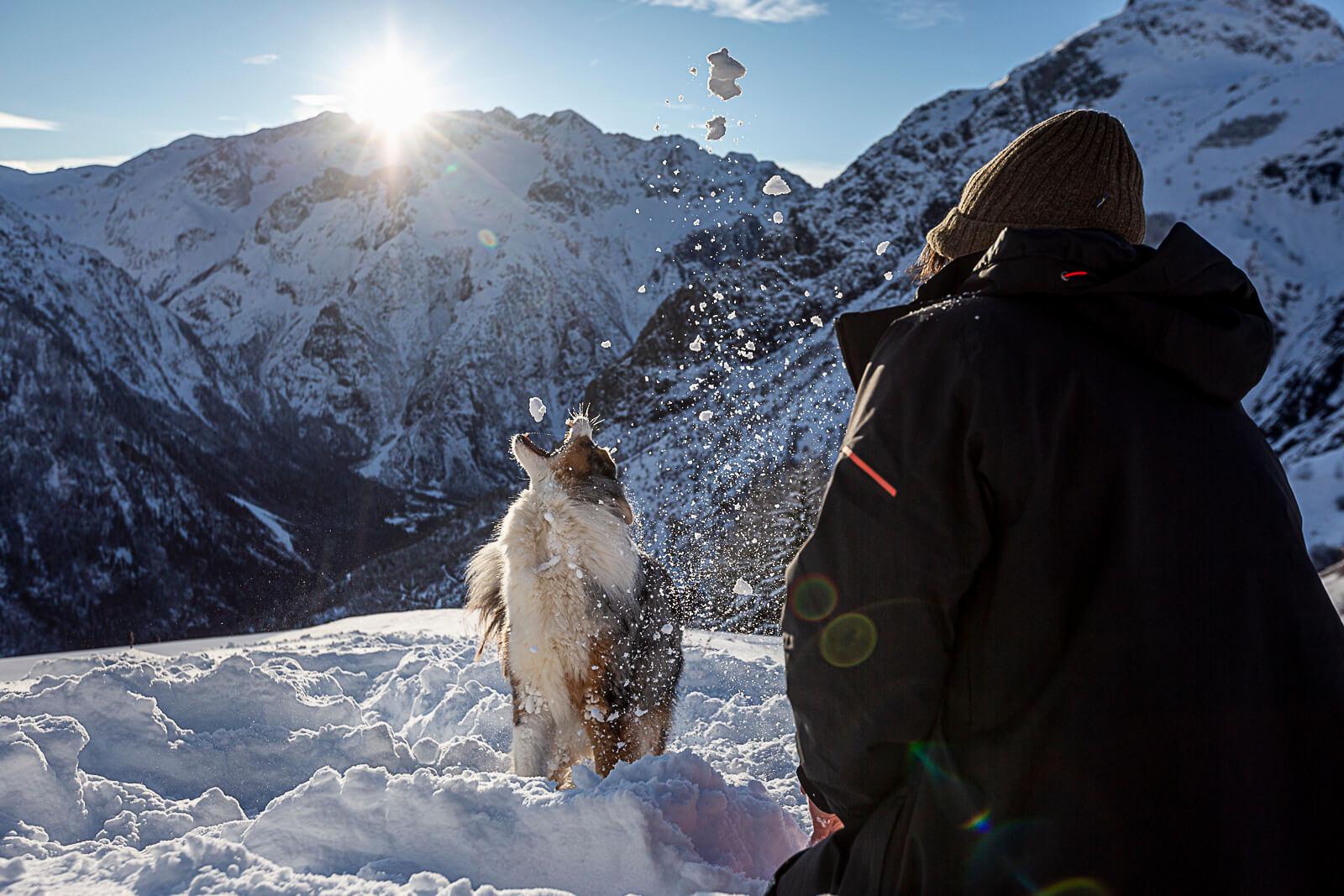 Chien dans la neige en hiver aux deux alpes