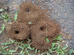 comment payer sur ants