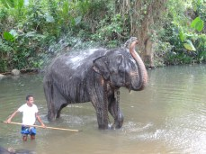 The millenium Elephant Foundation Sri Lanka