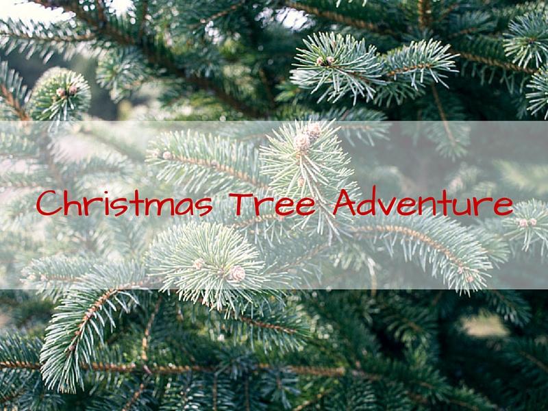 Christmas Tree Adventure