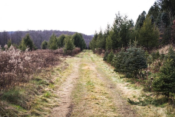 christmastree2015-1