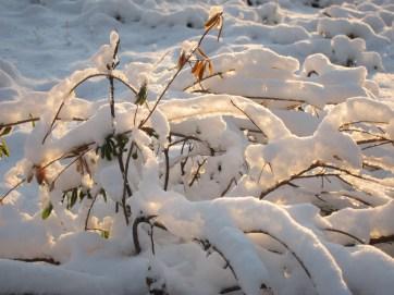 Snow, light, branches
