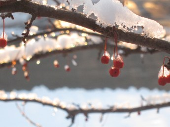 Red berries in the snow and light