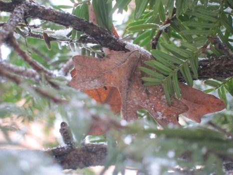Leaftree3