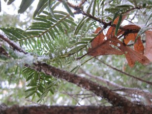 Leaftree1