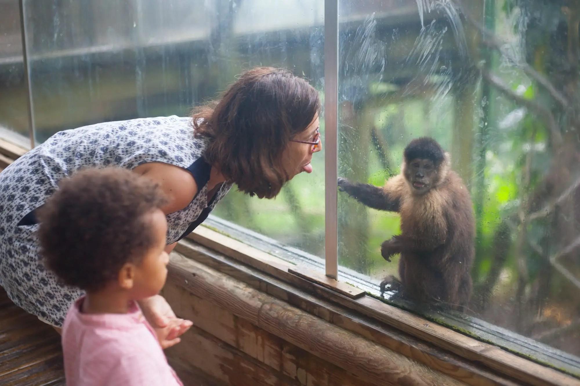 Une activité en famille ludique : la visite du zoo de Guadeloupe
