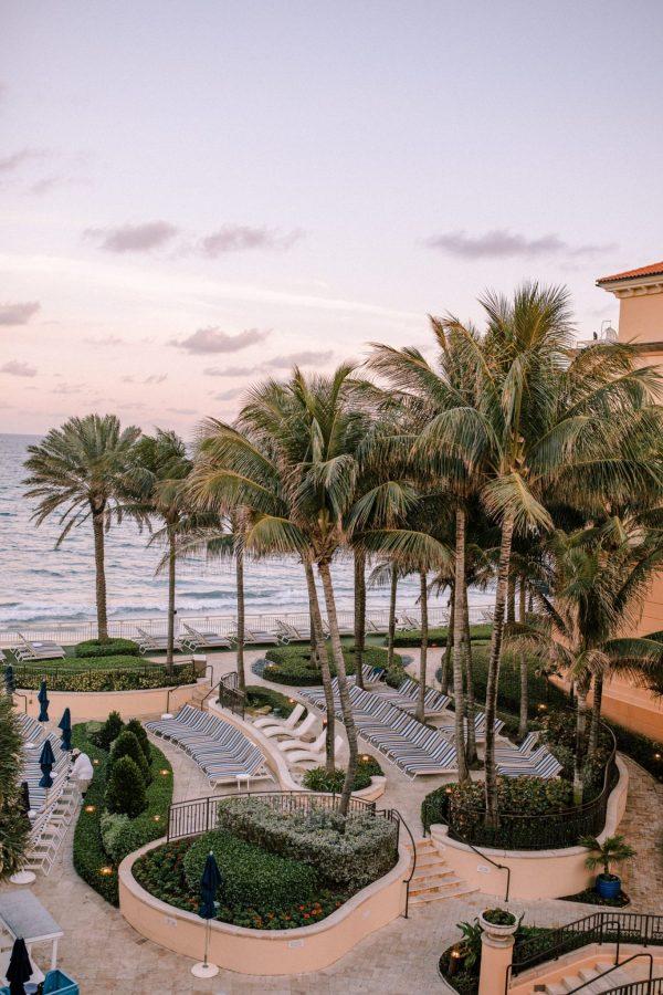 Eau Palm Beach Palm Trees