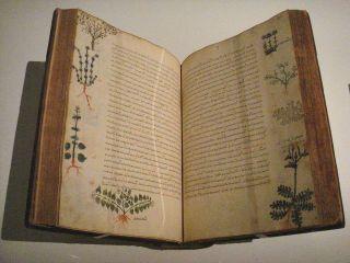 1024px-Dioscorides_De_Materia_Medica_Byzantium_15th_century