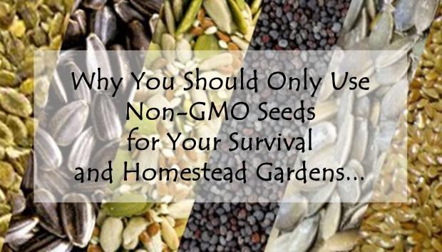 NonGMO Seed Header