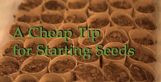 Seed Starter Header