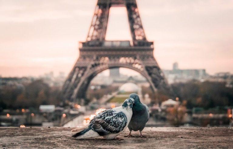 deux pigeons qui se font des papouilles devant la tour eiffel car paris parmi les destinations romantiques d'Europe