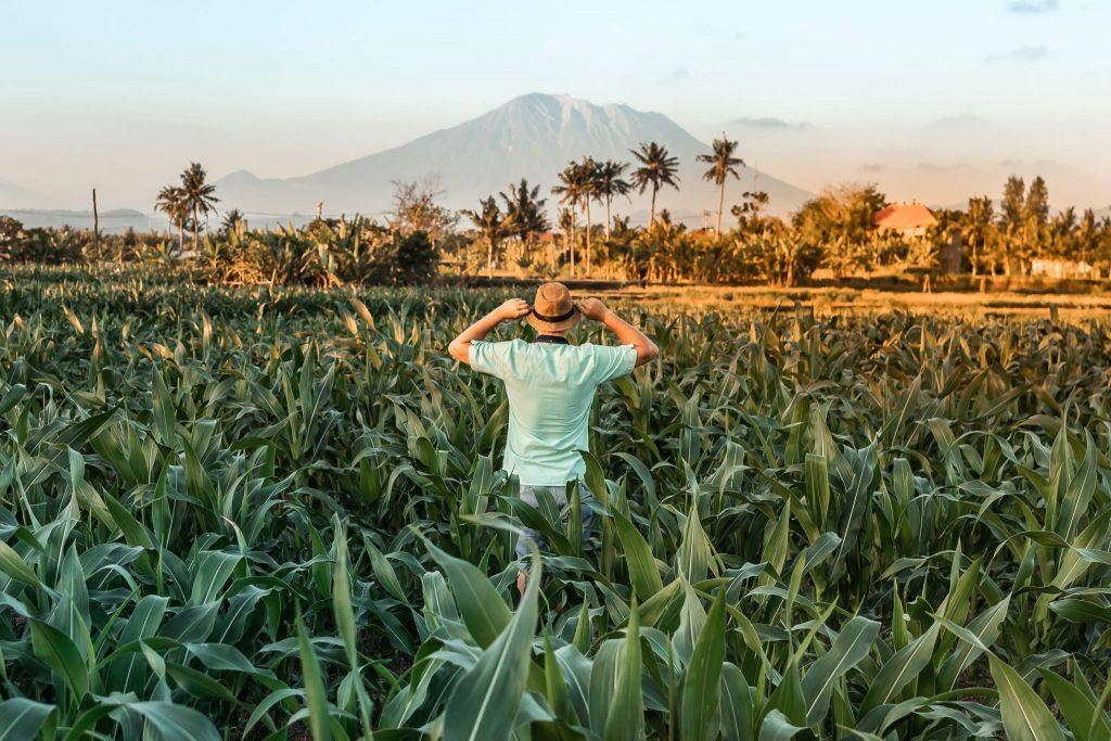 homme dans une rizière vue sur montagne sur îles à découvrir