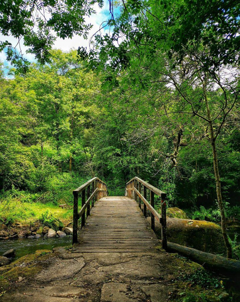 pont forêt arbres