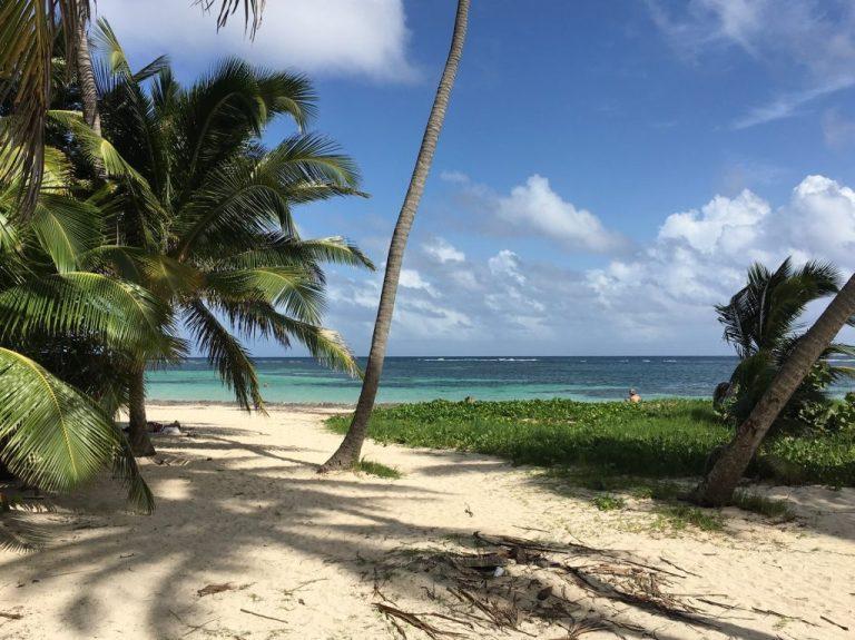 palmier sur une plage en martinique