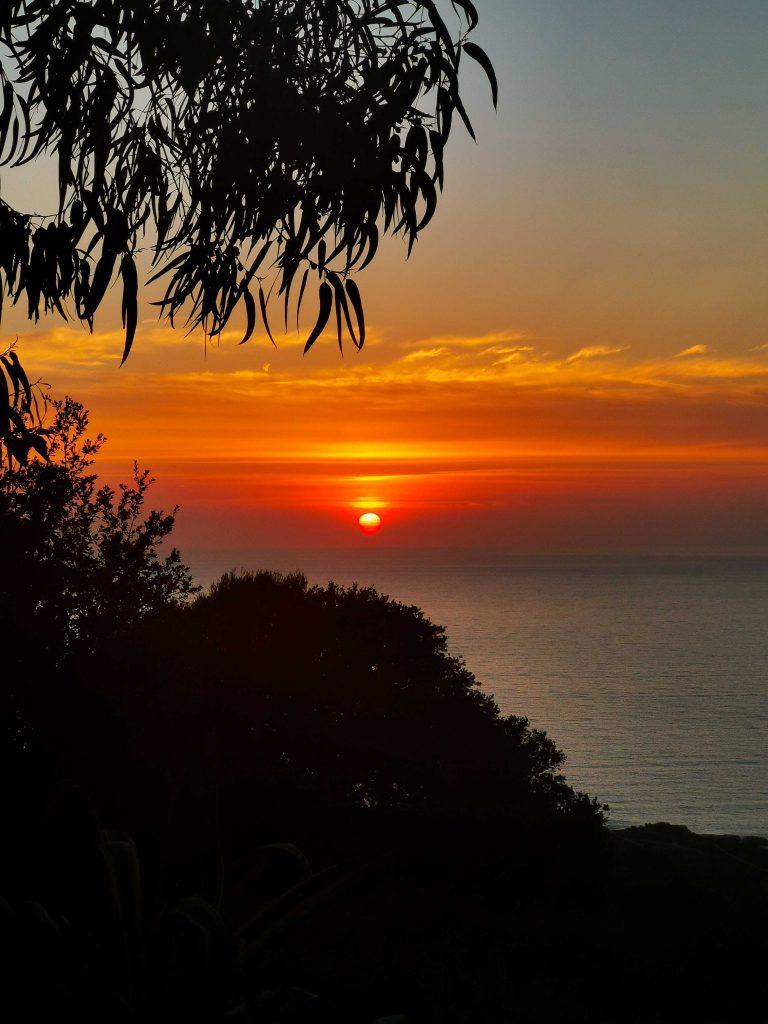 coucher de soleil et palmier