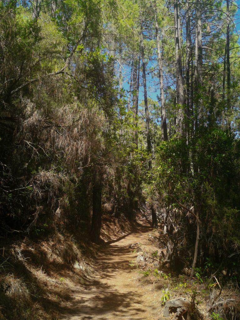 sentier dans la forêt de bonifato