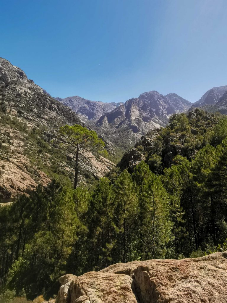montagne et foret de bonifato dans le nord-ouest de la Corse