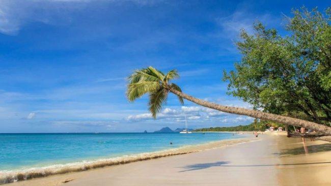plage de sable blanc et eau turquoise avec palmier en martinique