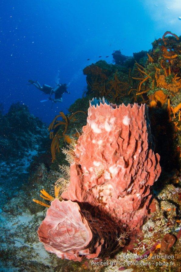 Plongée sur le récif de Cozumel. Quintana Roo, Mexique, juillet 2014.