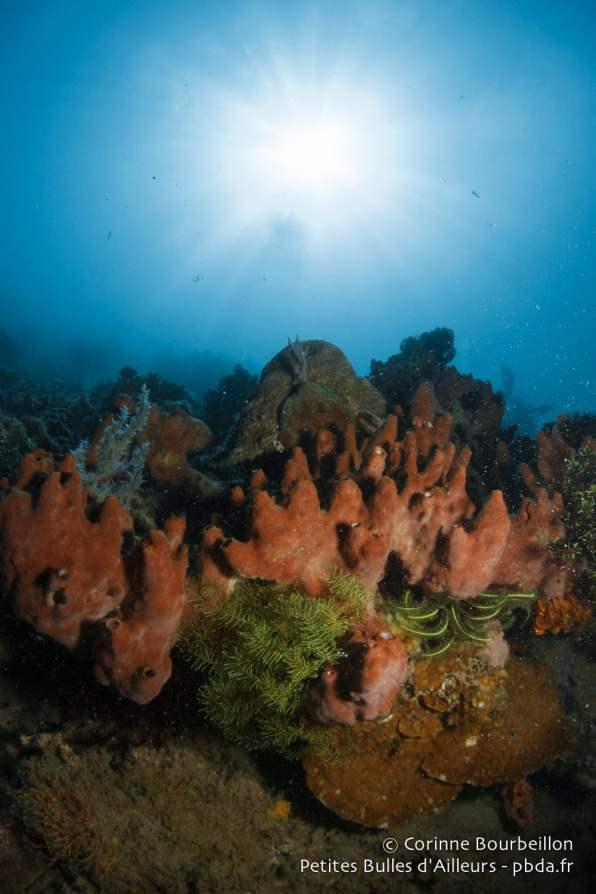 Jeu de lumière au-dessus du corail. Sekotong Bay, Lombok, Indonésie, juillet 2015.