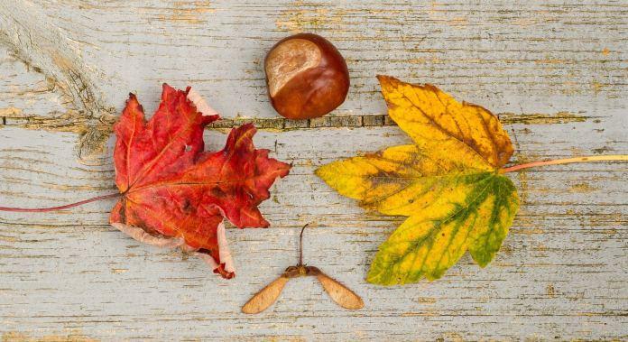 activité automne enfant herbier