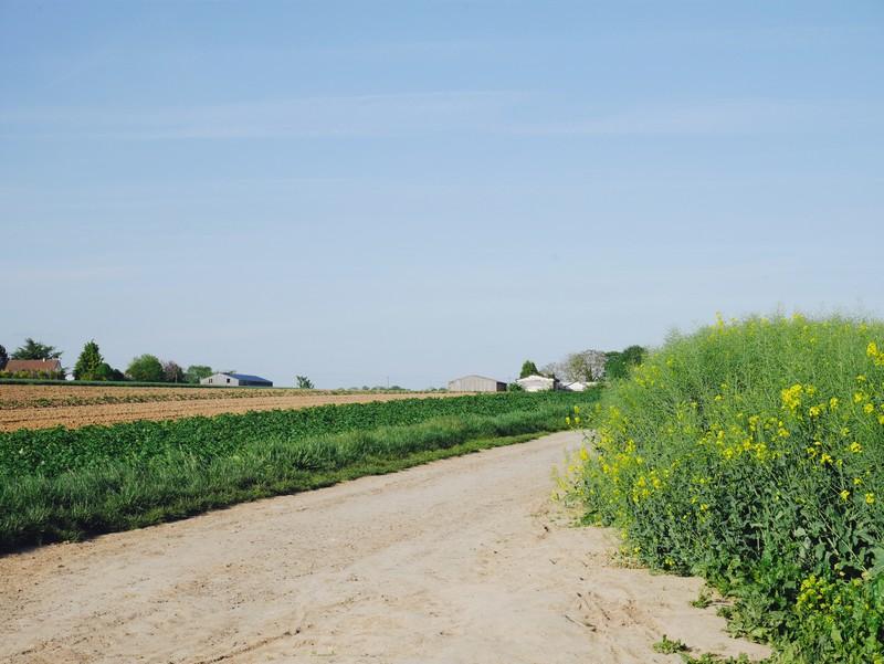 champs auvers sur oise