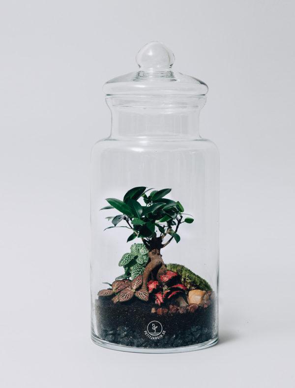 bring nature in petit jardin