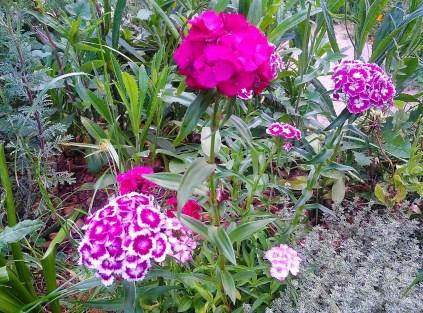 jardin fou1