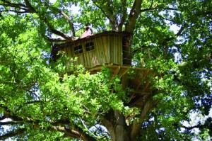 Domaine des Ormes - Cabane dans les arbres