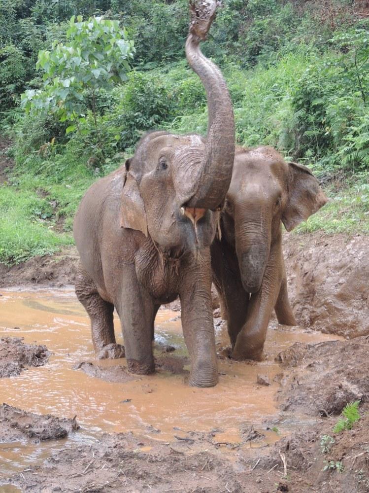 éléphants (2)