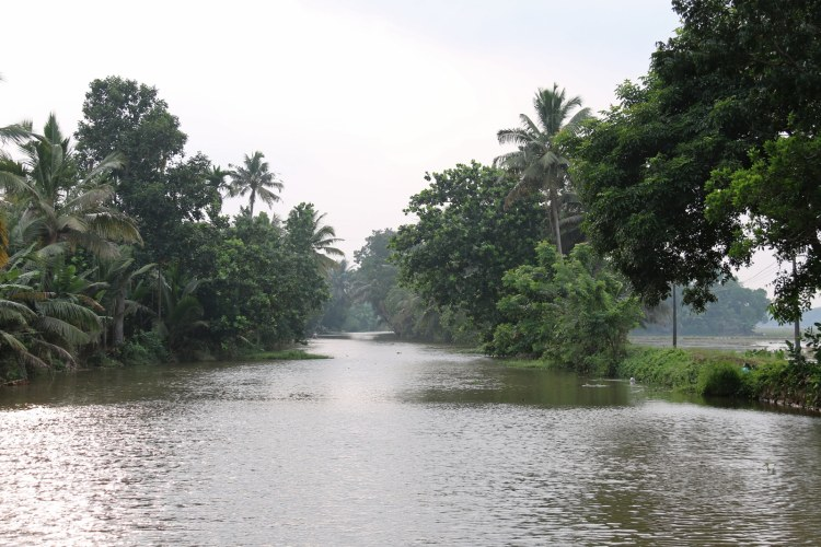 canaux alleppey backwaters india