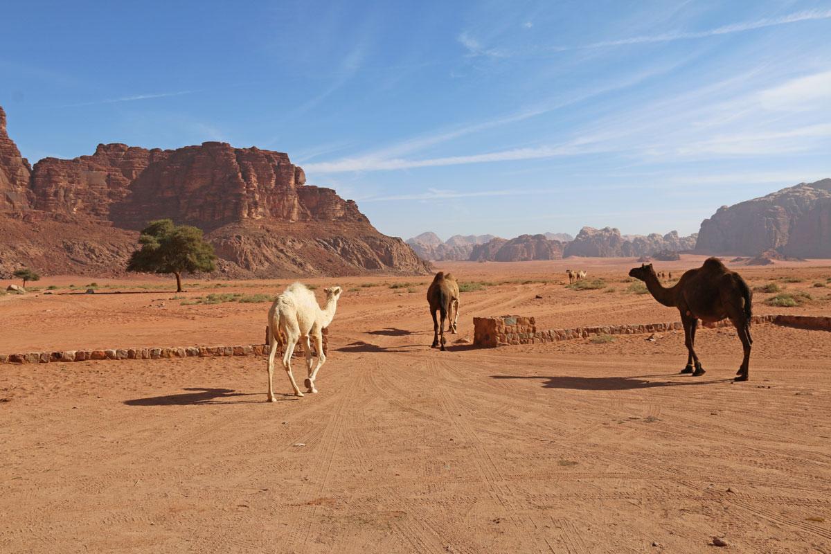désert du wadi rum en famille