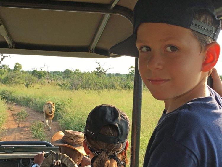petits globetrotteurs lion afrique du sud
