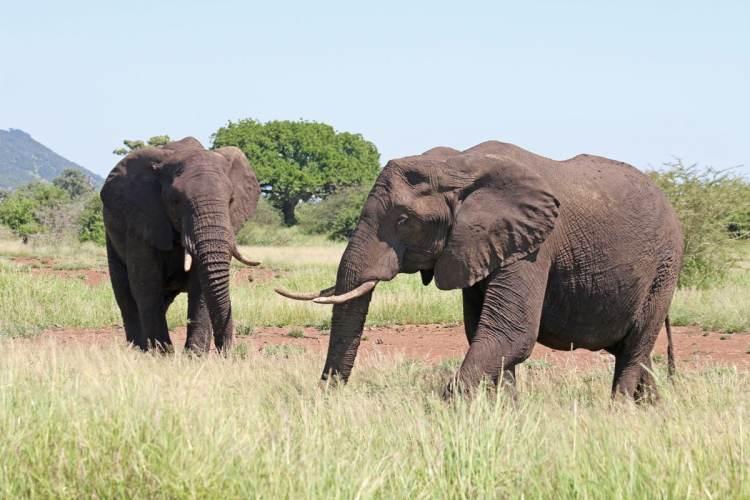éléphants parc kruger