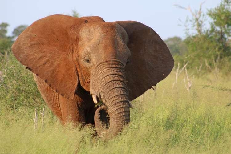 Hlane Park Swaziland éléphant