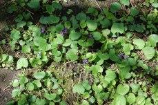 petkid-walk-in-the-woods_DSC_0978